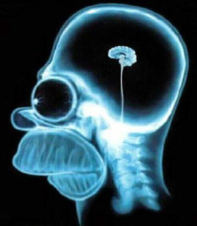 cervello-homer.jpg