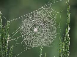 rete-web.jpg